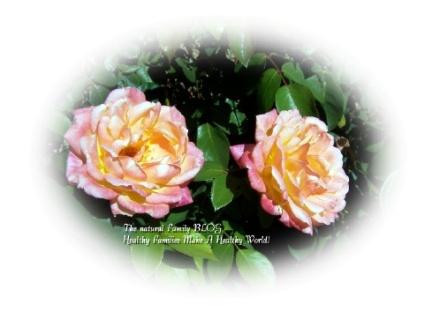 Natural Family Roses