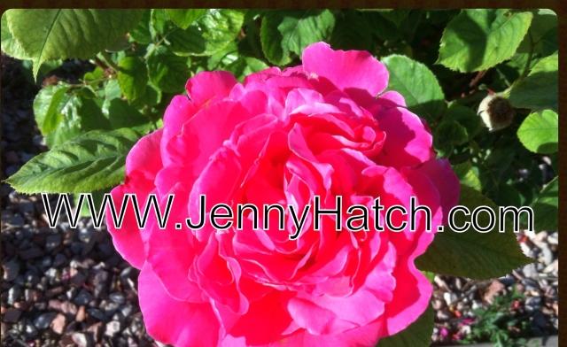 Jenny Hatch dot Com for You Tube